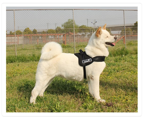 Padded Dog Harness  Inch Plus Chest Uk